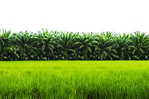 Crop_Protection_Thumbnail(1)