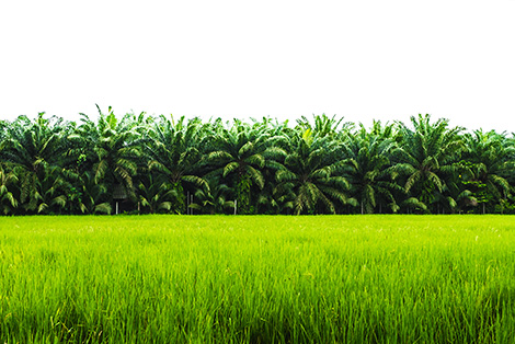 Crop_Protection_Image